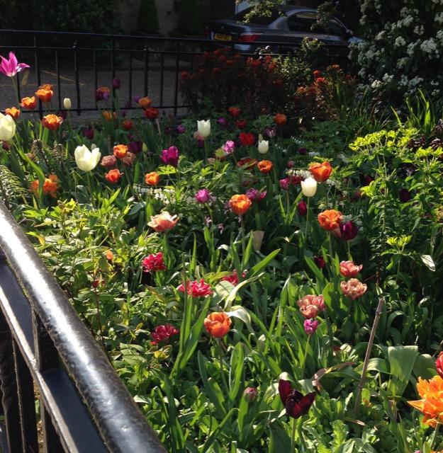 Flowers Chelsea Embankment