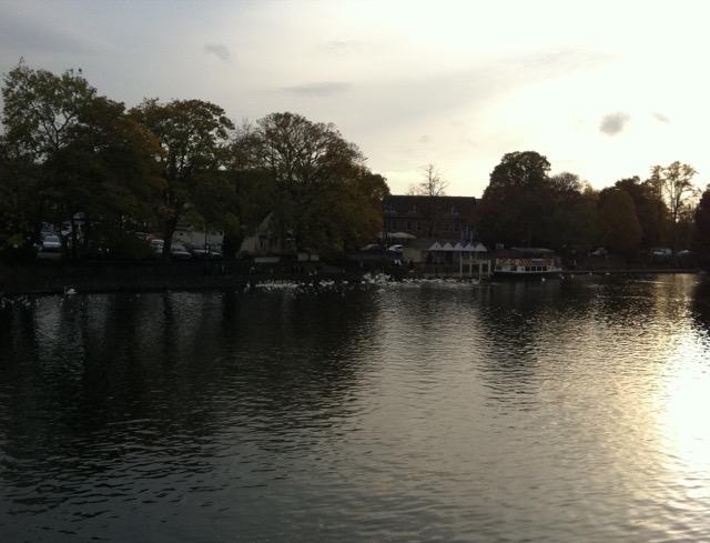 Swans on the Thames near Windsor Castle