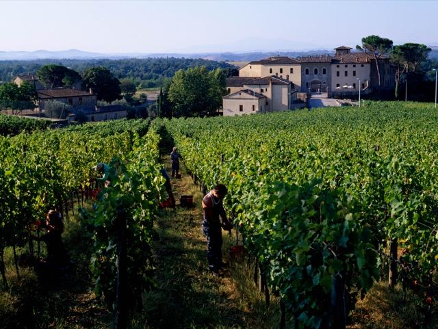 Vines at Castel Monastero