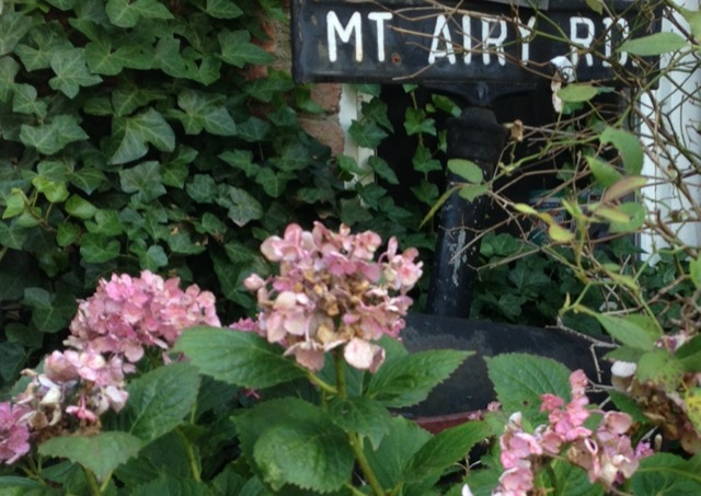 The ivy-choked sign marking Mt Airy Road where Edna lived off and on. Image © Saxon Henry.