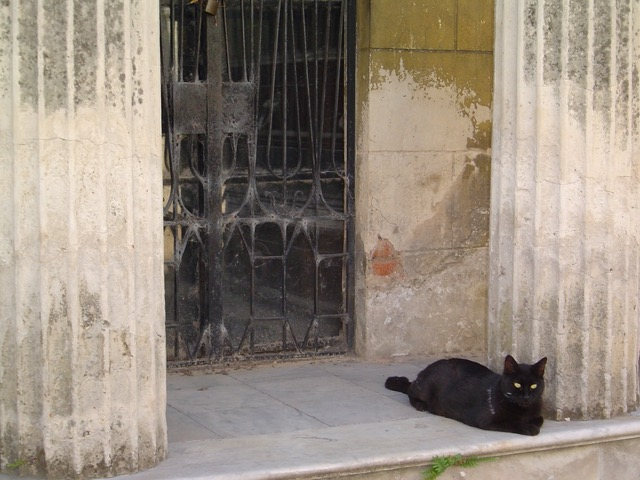 A black cat sits in front of a tomb in the Recoleta Cemetery. Image © Saxon Henry.