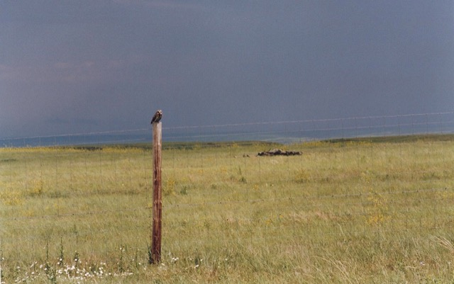 An owl perches on a fencepost on the Great Plains